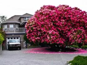 世上最美的10棵树, 有一棵在中国陕西!