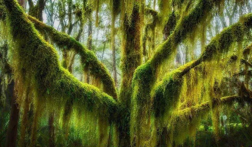 世上最美的10棵树, 有一棵在中国陕西! 小喵喵看世界 第5张