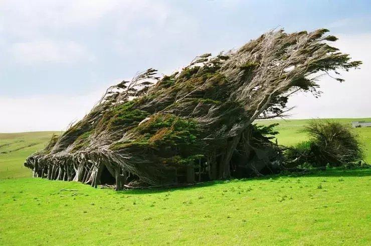 世上最美的10棵树, 有一棵在中国陕西! 小喵喵看世界 第4张
