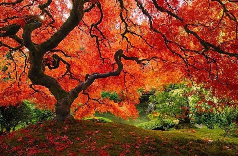 世上最美的10棵树, 有一棵在中国陕西! 小喵喵看世界 第7张