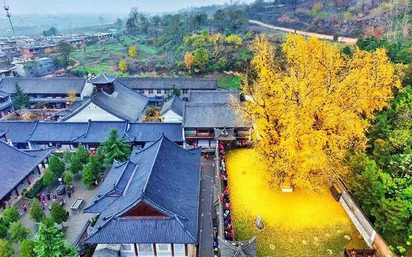 世上最美的10棵树, 有一棵在中国陕西! 小喵喵看世界 第10张