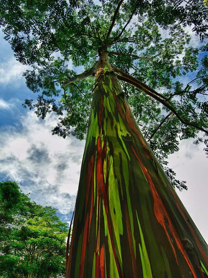 世上最美的10棵树, 有一棵在中国陕西! 小喵喵看世界 第8张