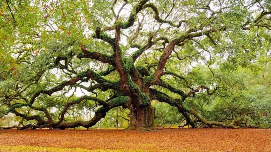 世上最美的10棵树, 有一棵在中国陕西! 小喵喵看世界 第9张